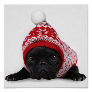 Bulldog With Hooded Sweater Poster