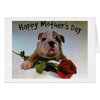 BULLDOG WITH ROSE IS FULL OF LOVE ON MOTHER'S DAY CARD