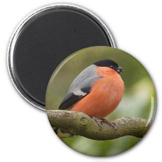 Bullfinch 6 Cm Round Magnet
