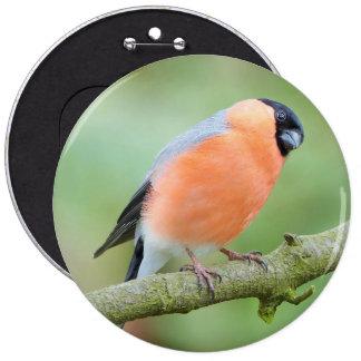 Bullfinch bird 6 cm round badge