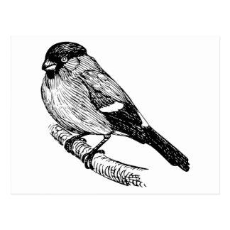 Bullfinch Bird Drawing Post Card