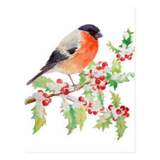Bullfinch on holly branch in snow post Card