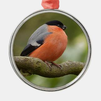 Bullfinch Silver-Colored Round Decoration