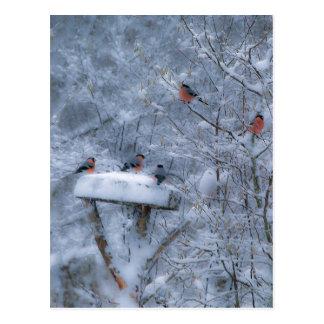Bullfinches Post Card