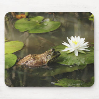 Bullfrog in Lily Pond Mouse Pad