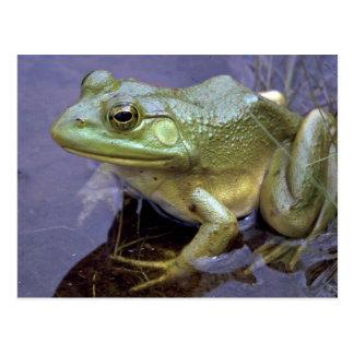 Bullfrog, Lake St. Peter, Ontario, Canada Postcard