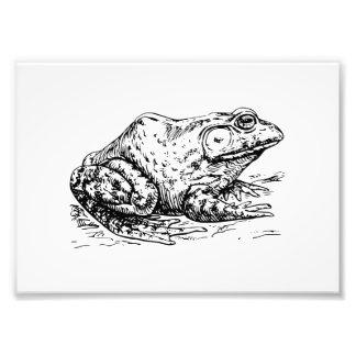 Bullfrog Photograph