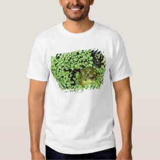 Bullfrog (Pyxicephalus adspersus) in duckweed Shirt