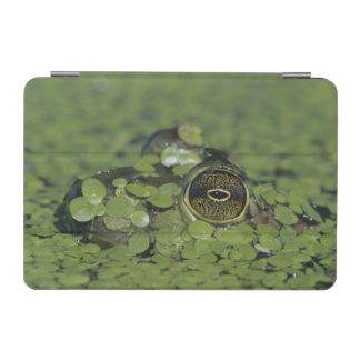 Bullfrog, Rana catesbeiana, adult in duckweed iPad Mini Cover