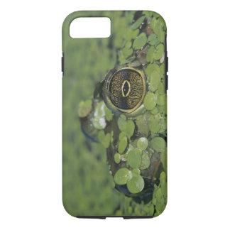 Bullfrog, Rana catesbeiana, adult in duckweed iPhone 8/7 Case