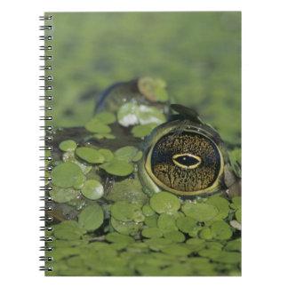 Bullfrog, Rana catesbeiana, adult in duckweed Notebook
