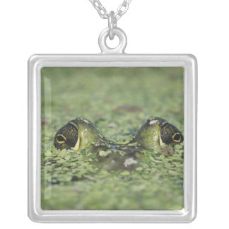 Bullfrog, Rana catesbeiana, adult in duckweed Silver Plated Necklace
