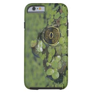 Bullfrog, Rana catesbeiana, adult in duckweed Tough iPhone 6 Case