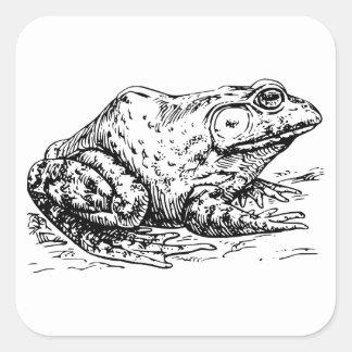 Bullfrog Square Sticker