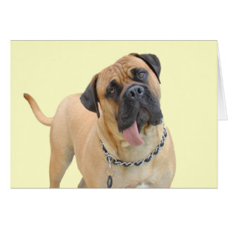 Bullmastiff Birthday Card by Focus for a Cause