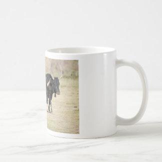 bulls basic white mug