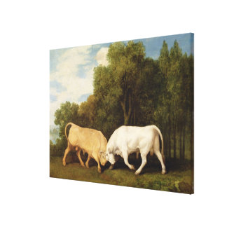 Bulls Fighting 1786 oil on panel Stretched Canvas Prints