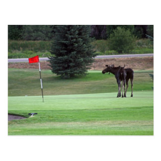 Bullwinkle plays a round of golf postcard