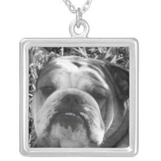 bully bulldog silver plated necklace