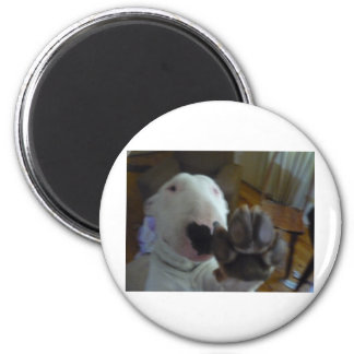 bully paw 6 cm round magnet