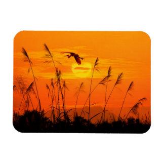 Bulrushes against sunlight over sky background rectangular photo magnet