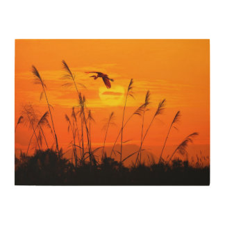Bulrushes against sunlight over sky background wood wall art