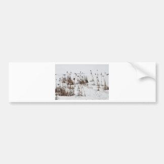 Bulrushes in frozen lake bumper sticker