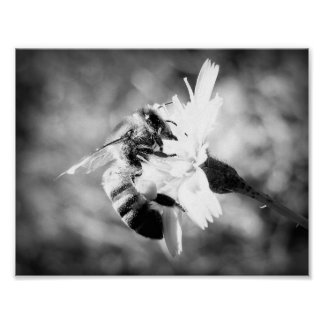 Bumble Bee - B&W Poster