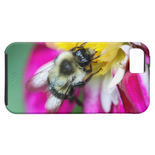 Bumble Bee iPhone 5 Case