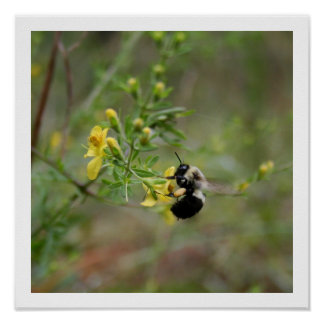 Bumble Bee & Foxglove Poster
