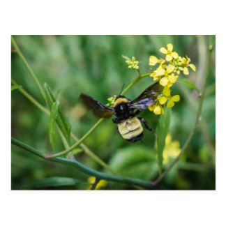 Bumble Bee in Flight Postcard