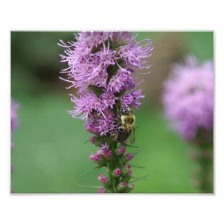 Bumble Bee on a flower Photo Print.