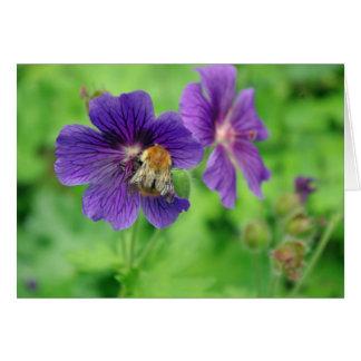 Bumble Bee on Geranium Card