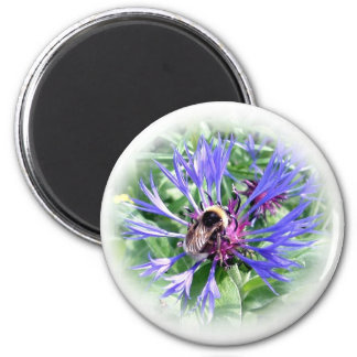 Bumble Bee on Knapweed Magnets