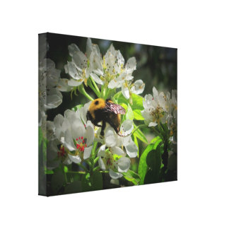 Bumble Bee on my pear tree Stretched Canvas Prints