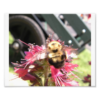 Bumble Bee on Red Feather Photo