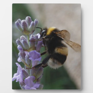Bumble Bee On Valender Photo Plaques