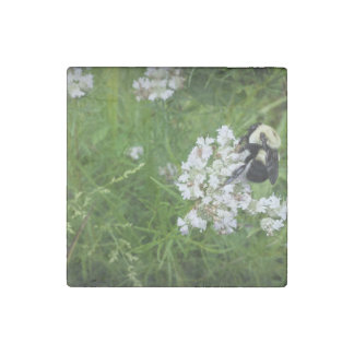 Bumble Bee on White Flowers Stone Magnet