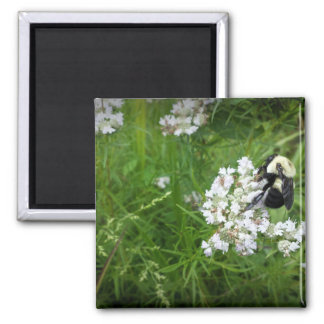 Bumble Bee on White Flowers Fridge Magnets