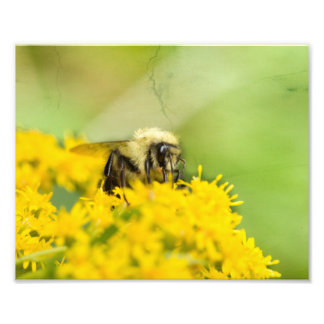Bumble Bee on Wildflower Photography Print Photo Art