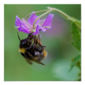 Bumble Bee Photo Poster