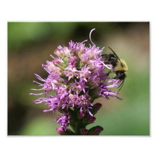 Bumble Bee Photo Print.