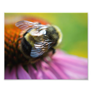 Bumble Bee Photo Print
