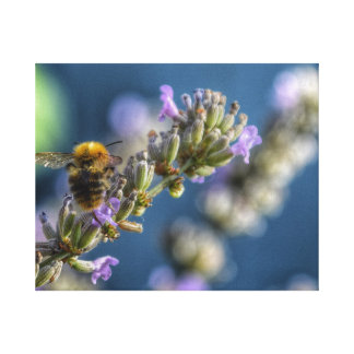 Bumble bee sitting on lavender with bokeh canvas print