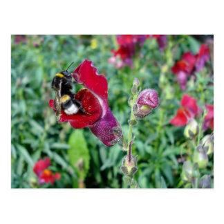 Bumble Bee / Snapdragon Postcard