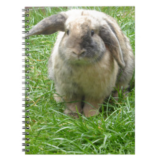 Bumble Rabbit Spiral Note Books