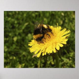 Bumblebee 1 poster