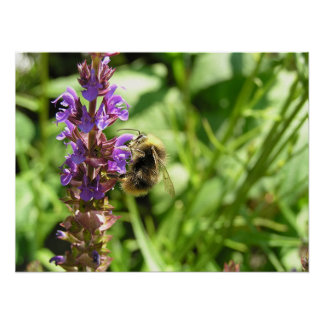 Bumblebee #2 poster
