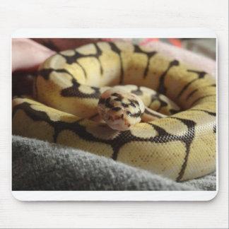 Bumblebee Ball Python Mouse Pad
