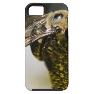 Bumblebee iPhone 5 Case